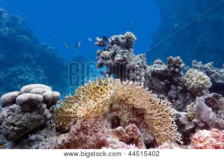 coral reef with hard and fire coral at the bottom of tropical sea