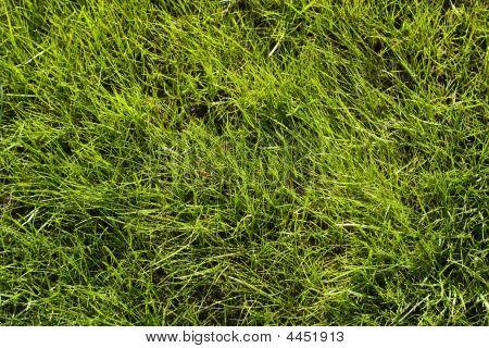 Green Lawn Pattern