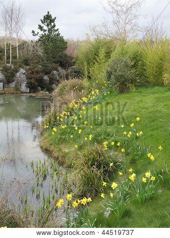 Daffodil Pond Landscape
