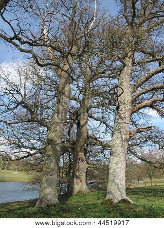 Lakeside Tree Landscape