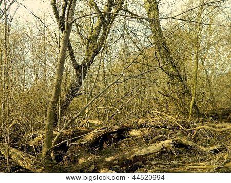 Overturned trees