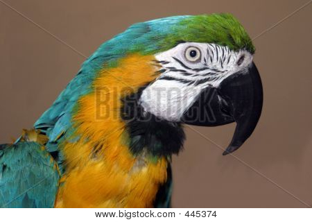 Max The Parrot 4