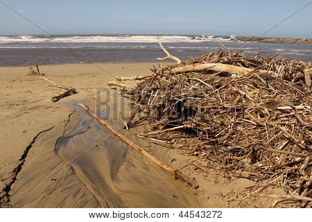 Driftwood After High Tide Storm