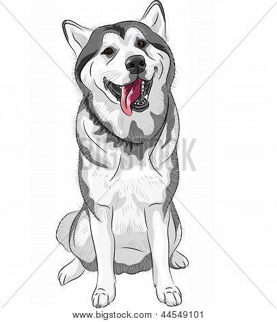 Vektor Schlittenhunde Siberian Husky Rasse sitzen und Lächeln