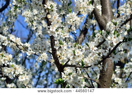 Blooming Branches