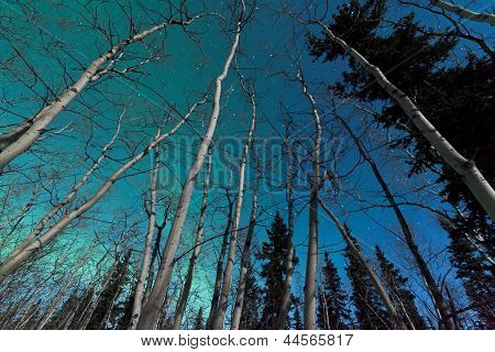 Green swirls of Northern Lights over boreal forest