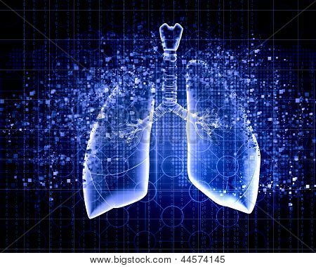Schematic illustration of human lungs