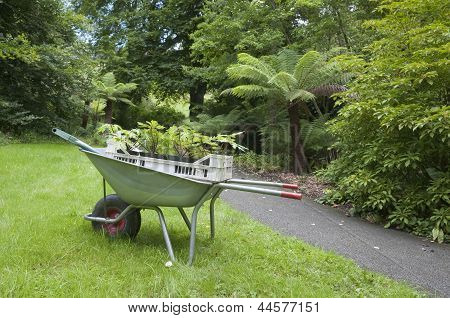 Gardening Wheelbarrow With Seedlings