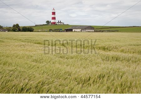 Lighthouse In Happisburgh Norfolk Uk