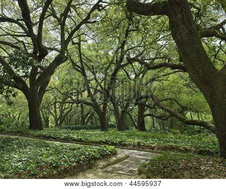 Hopeland Oak Canaopy