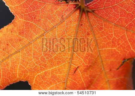 Natural background with leaf