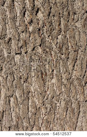 Background with a bark of an old tree
