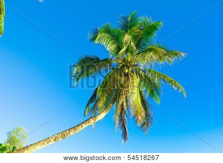 Trunk Palm Overhanging