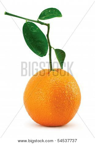 Orange With Leaves And Tubules On White Background
