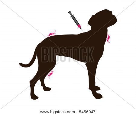 Dog Gets An Immunization Against A Disease Of Mosquito Bites