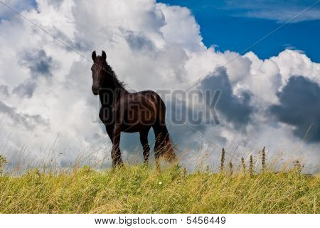 Countryside With A Horse On Dike Against Cloudy Background