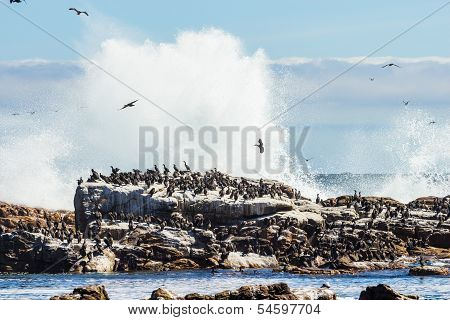Birds Sitting On Rock