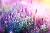 picture of floral bouquet  - Lavender - JPG