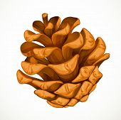 Pine Cone Isolated On White Background.jpg