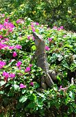 Iguana on a bougainvillea shrub