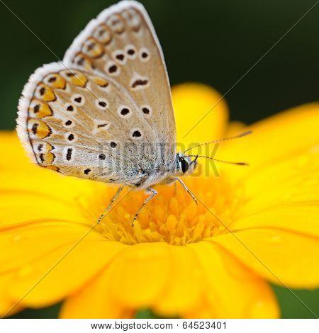 beautiful butterfly on yellow flower