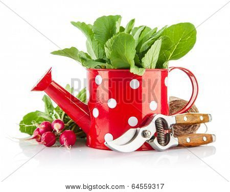Green leaves in red watering can and tools for gardening. Isolated on white background