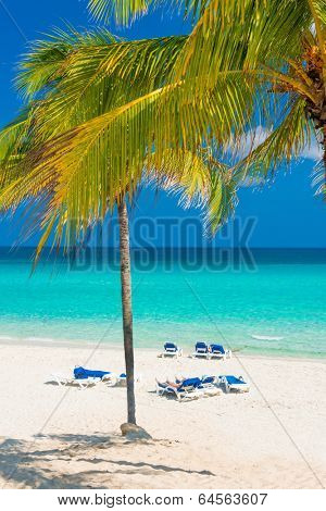 The beautiful Varadero beach in Cuba with coconut trees on a sunny day