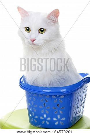 White cat isolated on white background