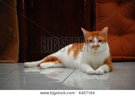 cat sitting majestically