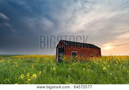 Sunset Behind Farmhouse On Rapeseed Field