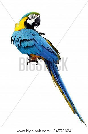 A beautiful macaw staring back