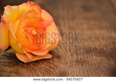 Simple flower yellow rose. background for text