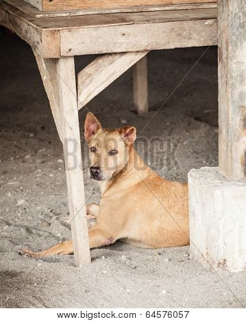 Stray Brown Mongrel Dog Sheltering In Construction Site