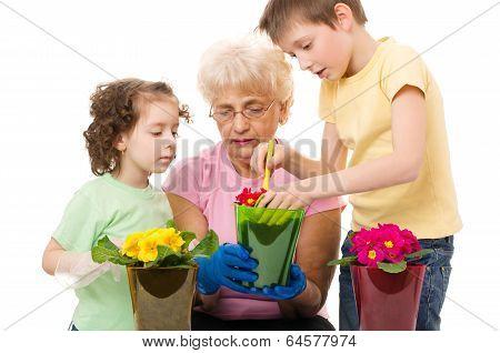 Gardening, Planting Concept