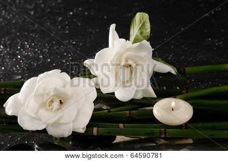 Two gardenia flower with thin bamboo grove on wet background