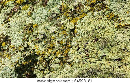 Moss Nixture
