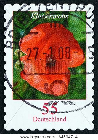 Postage Stamp Germany 2005 Red Poppy, Flowering Plant