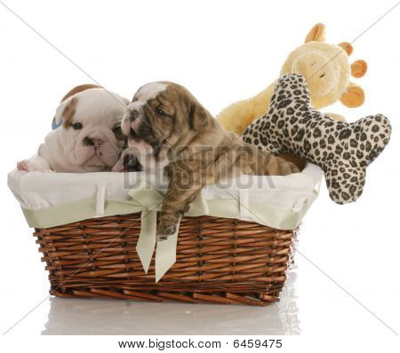 Bulldog Puppies In Basket