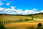 stock photo of senesi  - Vineyard cypress Trees rows and road in a rural landscape in val d Orcia land near Siena Tuscany Italy Europe - JPG