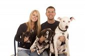 image of puppies mother dog  - a couple taking a family photo with their dogs - JPG