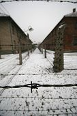 picture of auschwitz  - Barb wire in a WWII german prisoner camp - JPG