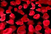 stock photo of wind-rose  - Beautiful red rose petals on dark background - JPG