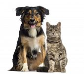 stock photo of collie  - Cat and dog sitting together - JPG