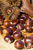 stock photo of glans  - Autumn chestnuts curly on wood background macro - JPG
