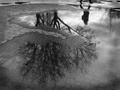 stock photo of rainy season  - Puddle reflection of tree and person walking past cobblestone walkway - JPG