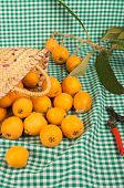 stock photo of loquat  - A still life with freshly picked loquats and pruning scissors - JPG