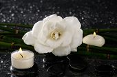 pic of gardenia  - gardenia flower and candle with bamboo grove  - JPG