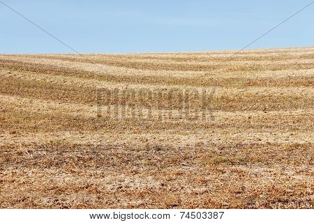 Autumn Field After Harvesting Soybean