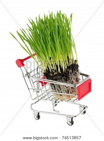Fresh Wheatgrass In Shopping Cart On White