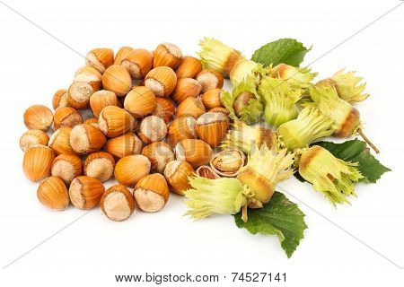 Hazelnut Bunch